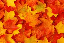autumn leaves wall mural wall murals and autumn leaves wall mural autumn leaves wall mural