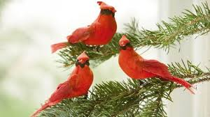extraordinary inspiration cardinal ornaments meaning to