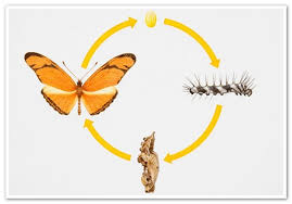 the butterfly cycle national geographic