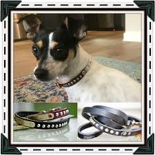 Buster Comfort Collar Best 25 Dog Cone Ideas On Pinterest Dog Cone Collar Dog Design