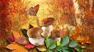 toadstools tag wallpapers toadstools trujace muchomory natura