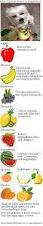 what fresh fruit can my dog eat dogs health problems