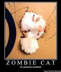 Funny Zombie Memes - zombie cat meme cat planet cat planet