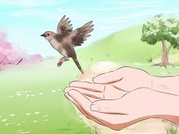 3 ways to feed a baby bird wikihow
