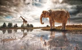 apple wallpaper elephant art elephant river fantasy desktop wallpapers hd africa