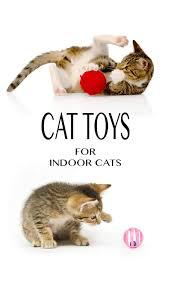 guide to cat toys for indoor cats by the happy cat site