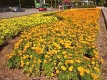 singapore garden city stock photo image 53525337
