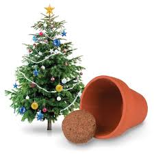 grow your own tree tobar wholesalers
