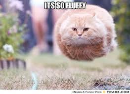 Kitty Meme Generator - fluffy memes image memes at relatably com