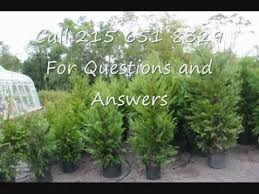 we are offering deals on trees for privacy and landscaping