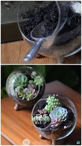 diy indoor outdoor succulent garden ideas instructions plants