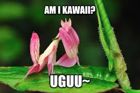 Mantis Meme - livememe com kawaii mantis