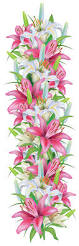 Free Decorative Borders Clip Art Pink And White Lilies Decoration Border Png Clipart Image Gallery