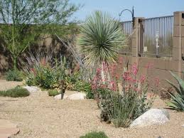 Desert Landscape Ideas For Backyards Landscape Design Tucson Az Sonoran Gardens Inc