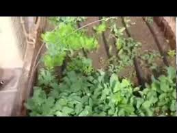 vegetable garden in arizona during january and drip tape system