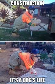 Builder Meme - dog the builder memes imgflip