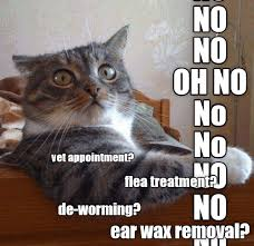 Vet Memes - lolcats vet lol at funny cat memes funny cat pictures with