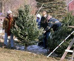 christmas trees heritagefarms