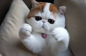 Cat Hug Meme - hug cat blank template imgflip