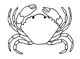 imagenes animales acuaticos para colorear animales oceanicos para colorear para imagenes de animales acuaticos