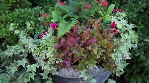 fresh ideas for fall containers grow beautifully
