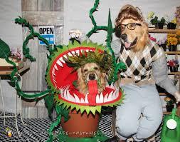 Phoenix Halloween Costume 100 Homemade Dog Halloween Costume Ideas 25 Dog