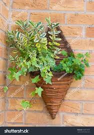 Wall Mounted Planters by Cone Shaped Wicker Wall Mounted Flower Stock Photo 165071639