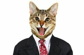 Cat Suit Meme - beware facebook will disable your account if you share this cat