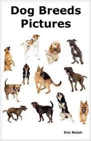american eskimo dog vs pomeranian amazon com dog breeds pictures over 100 breeds including