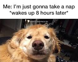 Tired Dog Meme - when you re gonna take a nap very funny pics