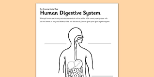 human digestive system crossword u0026 respiratory system crossword