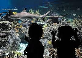 national aquarium happy birthday blacktip reef