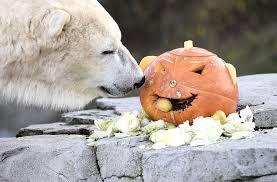 animal tracks halloween in the animal kingdom today com
