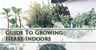 herbs indoors guide to growing herbs indoors gilbert mesa queens creek