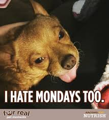 I Hate Mondays Meme - tucker meme i hate mondays too jen around the world