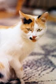 Remove Cat Urine From Sofa 15 Remove Cat Urine From Sofa How To Get Smell Out Of