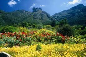 Kirstenbosch Botanical Gardens Kirstenbosch National Botanical Garden Cape Town Celebrate 100