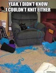 Bad Kitty Meme - it seemed like a good idea meme funny pictures and cat