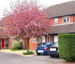 flowering trees for small gardens uk fresh flower shop