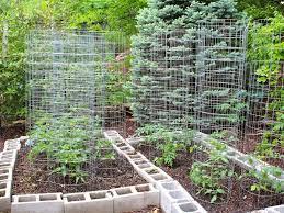 backyard 14 backyard vegetable garden ideas pictures