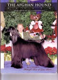 afghan hound owner reviews articles