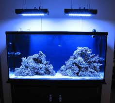 Reef Aquascape New 8 Weeks 60 Gallon Reef Aquascaping Reef2reef Saltwater And