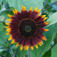 the flowers of summer at 13 can t kill flowers for beginners hgtv