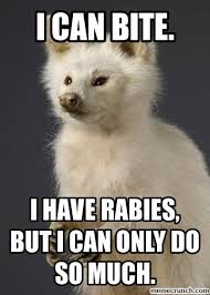Albino Meme - the albino raccoon rabies