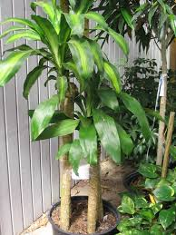 tropical plants need winter shelter lsu agcenter