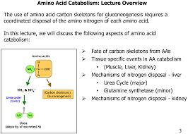 gs l43 44 amino acid catabolism i u0026 ii gs biochem e4 flashcards