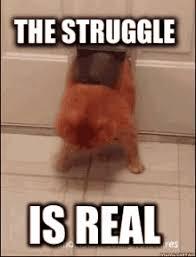 The Struggle Is Real Meme - the struggle is real gifs tenor