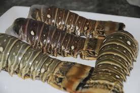 cuisiner des queues de langouste langouste chou