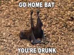 Bat Meme - drunken bat meme funny stuff pinterest meme memes and funny
