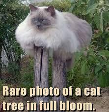 Rare Memes - animal memes rare cat tree funny memes